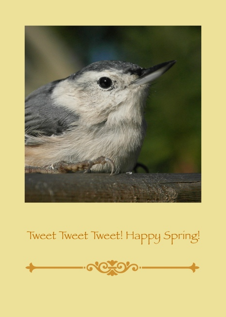 Happy Spring Bird (2)